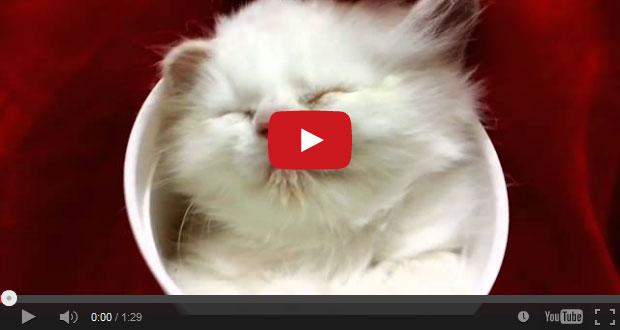 cats ear mites